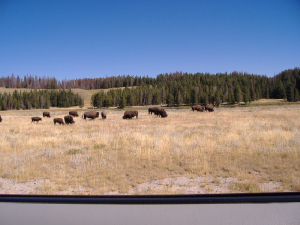wy-yellowstone3.jpg